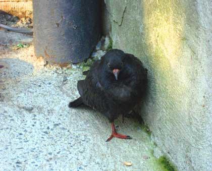 bird_bhb.jpg