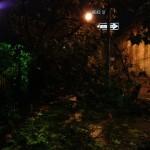 downed tree, hicks and poplar
