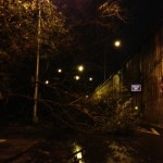 tree down, hicks by bqe