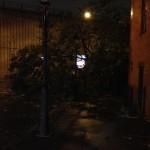 tree down on hicks by BQE